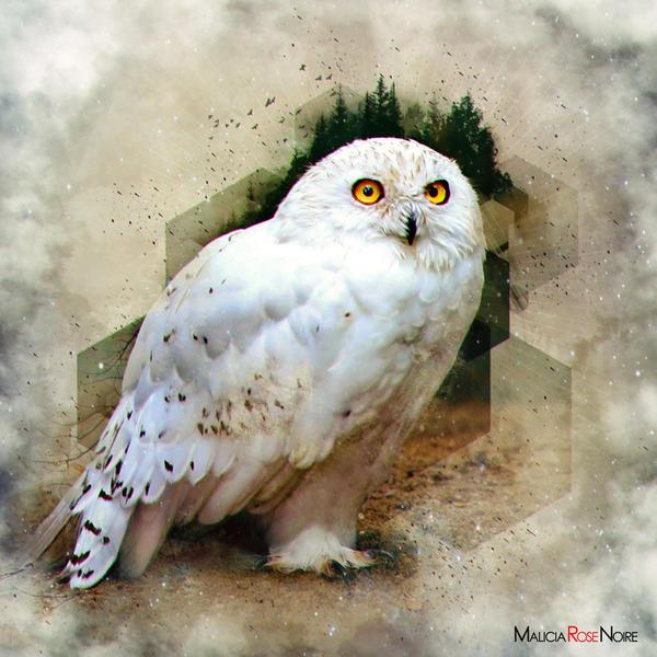 Owl by MaliciaRoseNoire