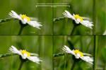 Reversed Lense DOF by Youmitori
