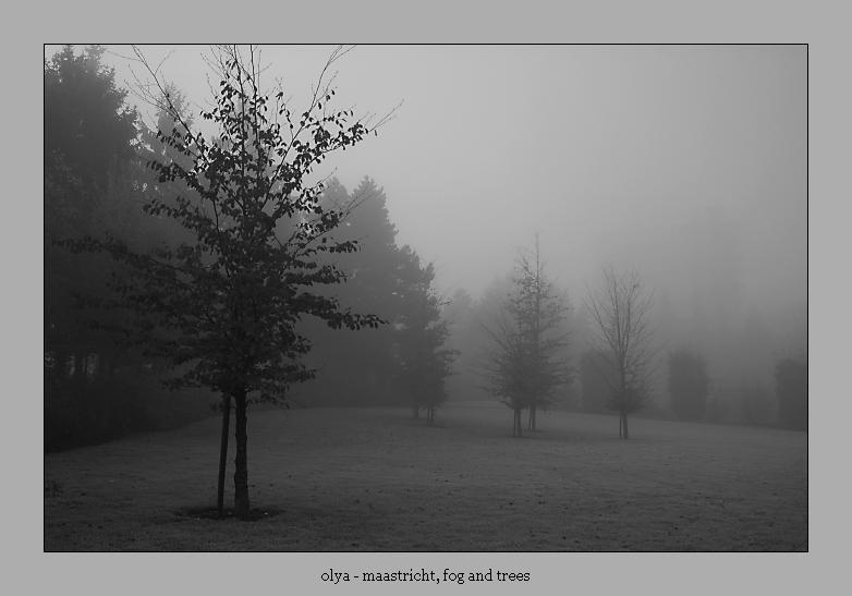 maastricht, fog and trees by olya
