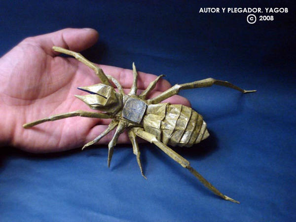 Camel Spider by... Giant Camel Spider Size