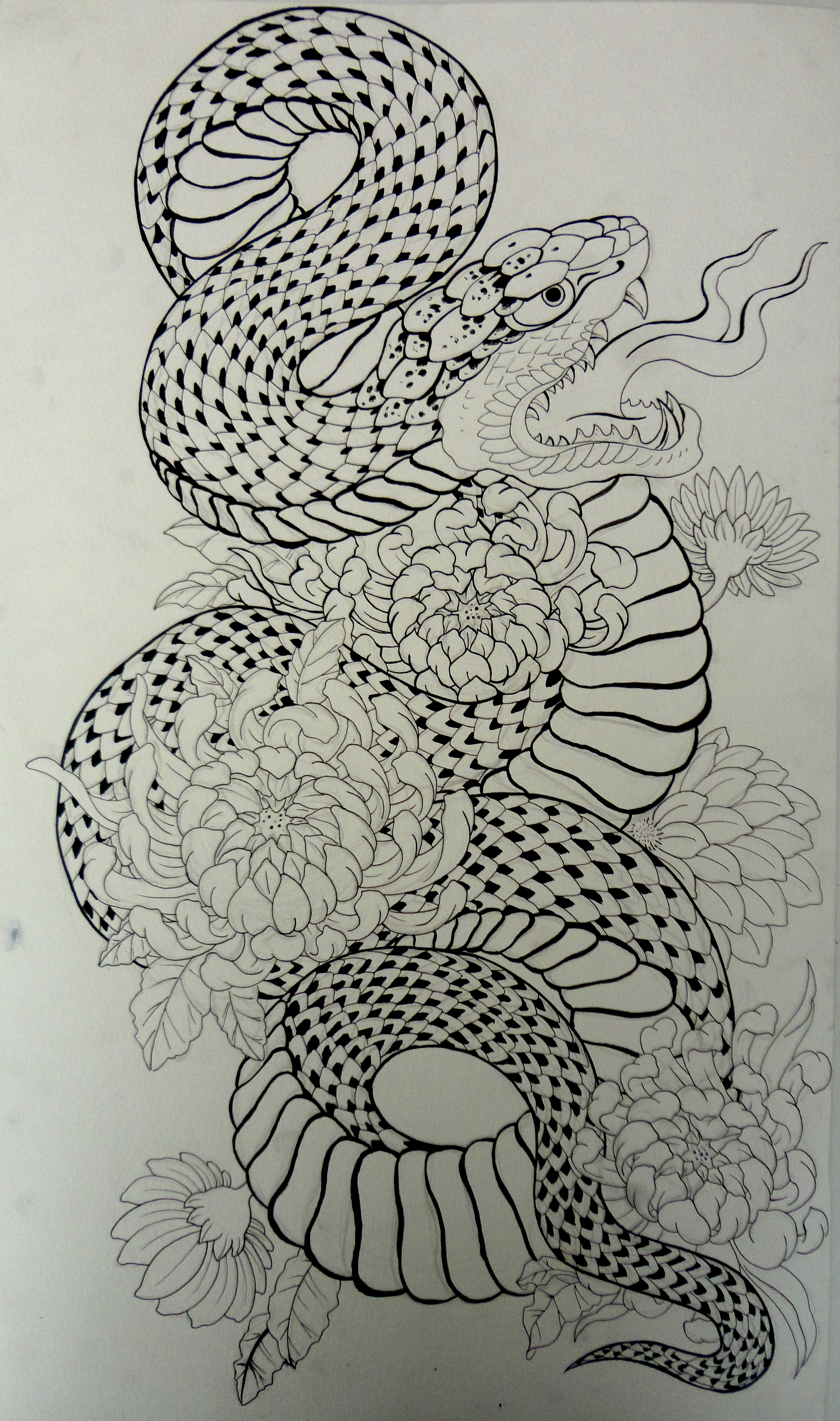 The gallery for --> King Cobra Drawings