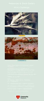 Gallery Prints Challenge
