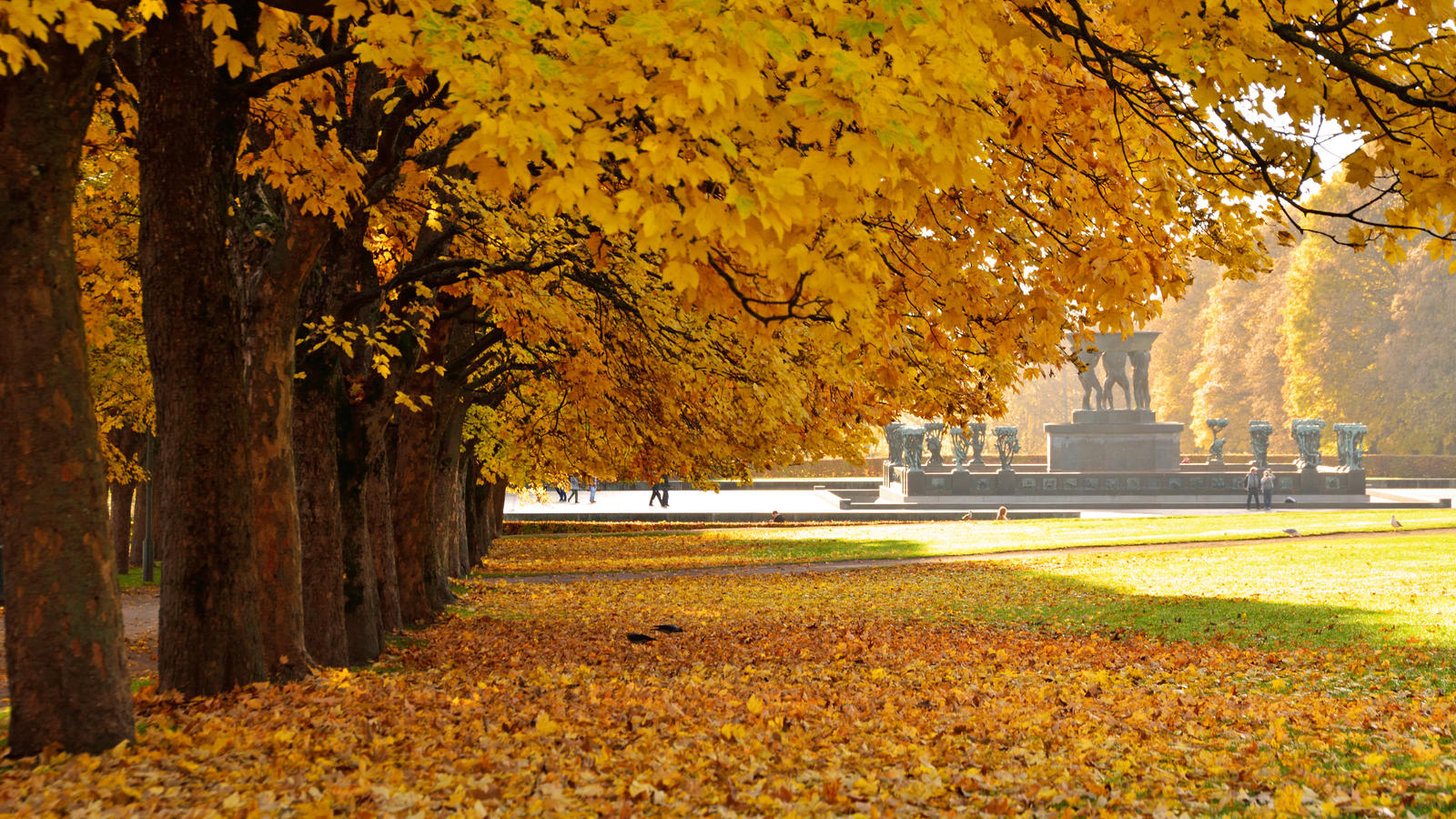 Maple Trees by francis1ari
