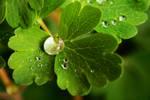 Green Tears