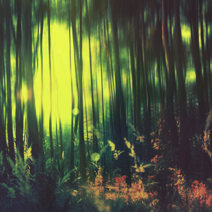 ...ambient forest... by MozolewskiMichal
