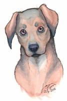 Puppy Eyes by jessielp89