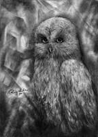 Grey Owl by SRudy