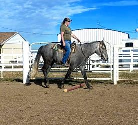 The Perfectest Baby Horse