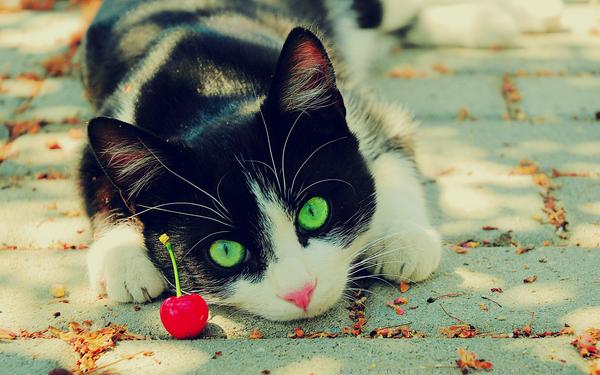 Cherries are Toys . desktop by Sophibelle
