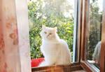 Piffy Cat