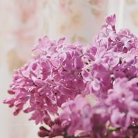 Sun-kissed Lilac