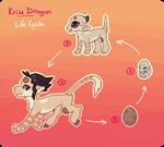 [KD] Life Cycle