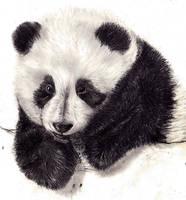 Panda by kamillo1000