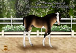 ON HOLD - Norway Warmblood Colt