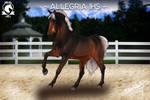 Allegria IHS by IvoryHillStables