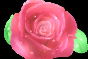 Rose by MajorGumplez