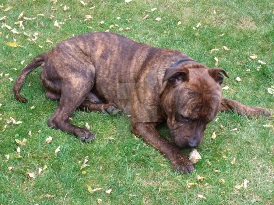 Small Dog Death By Mapap