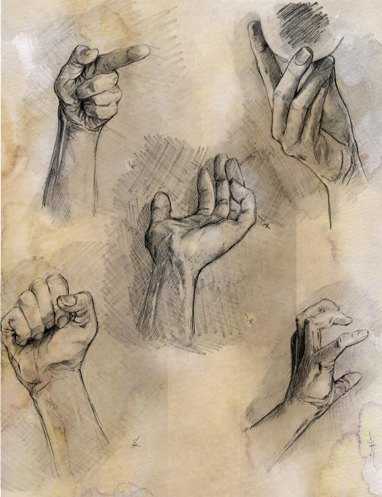 Anatomy Study Hands by QuestingRaven on DeviantArt