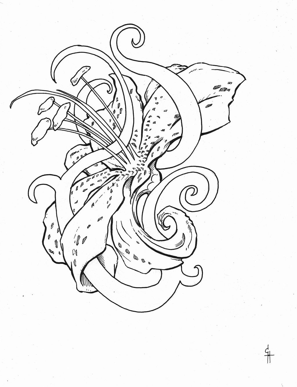 Line Drawing Tattoo Designs : Stargazer lilly tattoo design lines by questingraven on