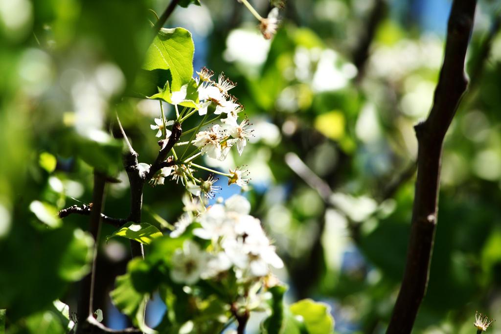 Flowering by SimplyForgotten94