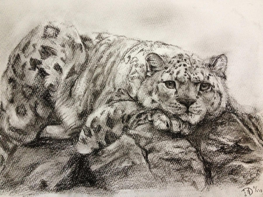 Snow Leopard by chirpeax