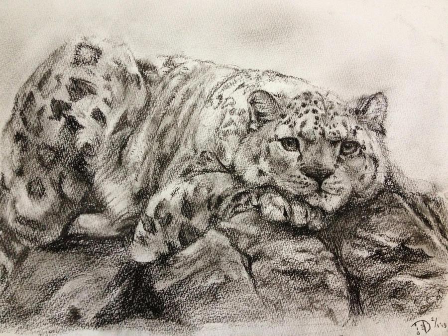 Snow Leopard by chirpeax