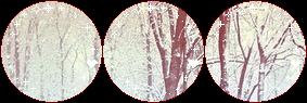 snowy forest II f2u by aisuu-chann