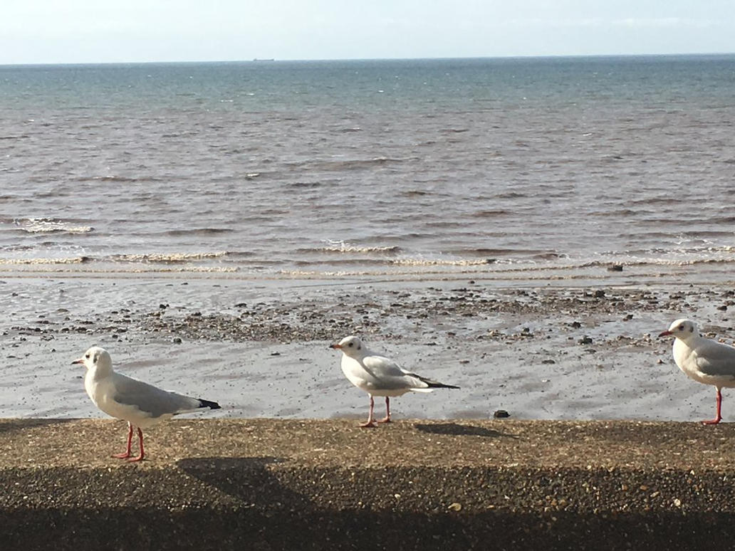 Hunstanton Seagulls - Norfolk by Gman2