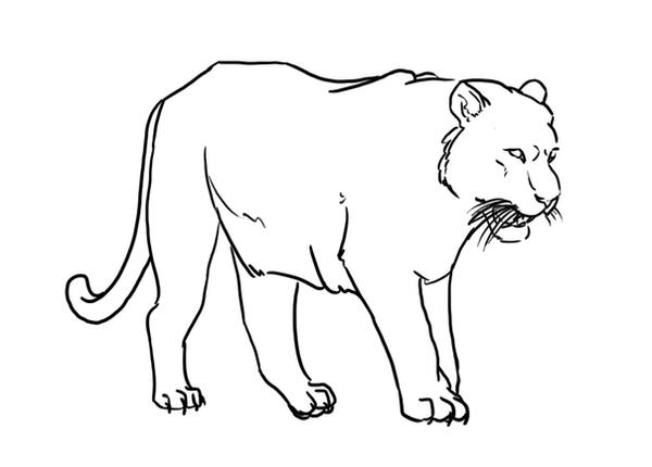 tiger without stripes coloring page free tiger lineart blank by luar linearts on deviantart