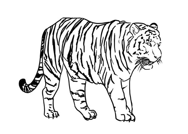 Line Art Tiger : Free tiger lineart stripes by luar linearts on deviantart