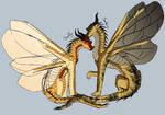 Sandfly and Bembicini