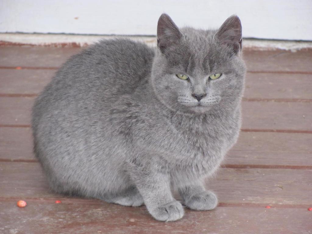 Cat 9 Stock by gdolapp