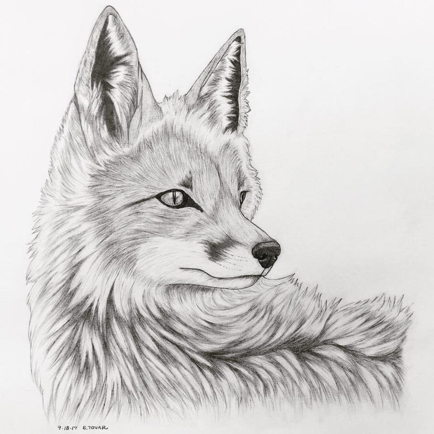 This is an image of Soft Fox Pencil Drawing
