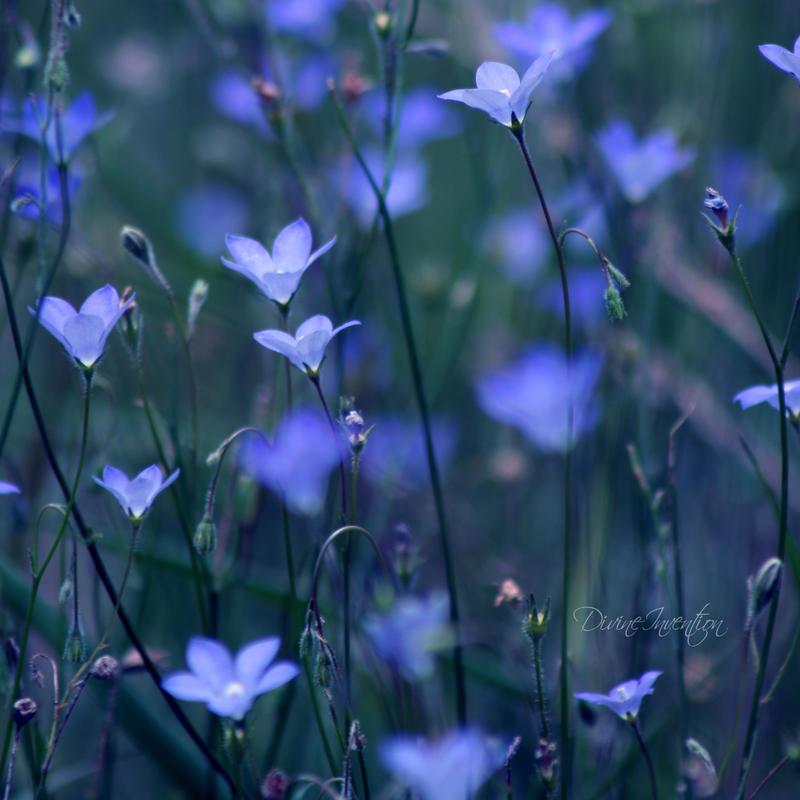 Where the wild flowers grow