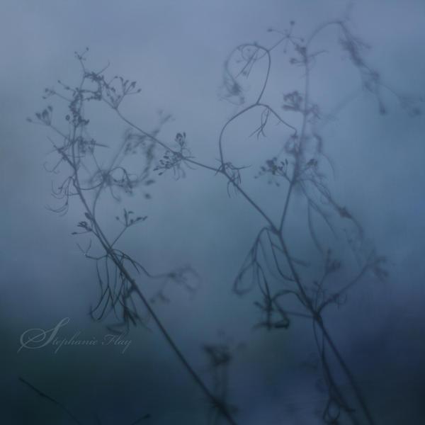 Misty blue by DivineInvention