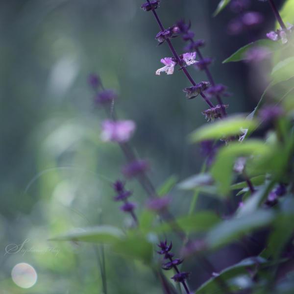 The midnight garden by DivineInvention