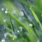 Sunshine through the rain