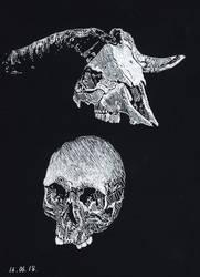 Skulls by ShadowDragonK