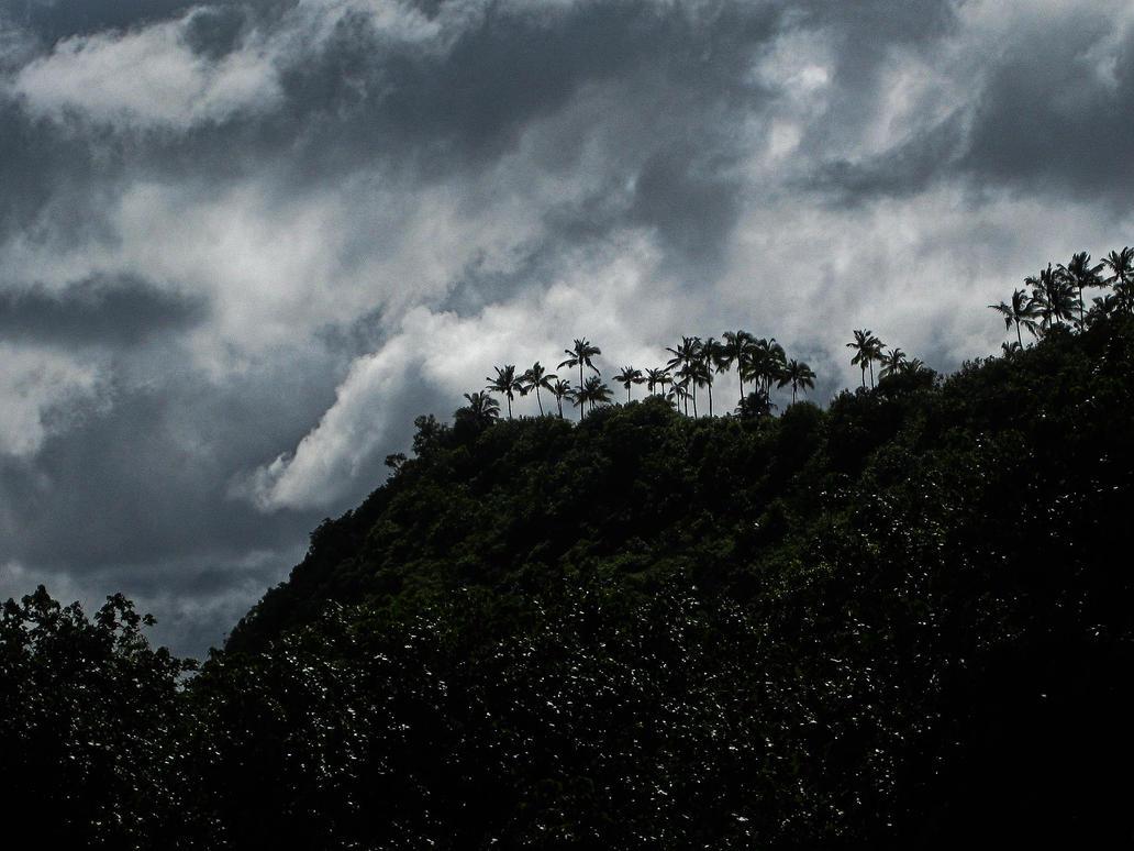 Palms Along Wailua River by Utukki-Girl