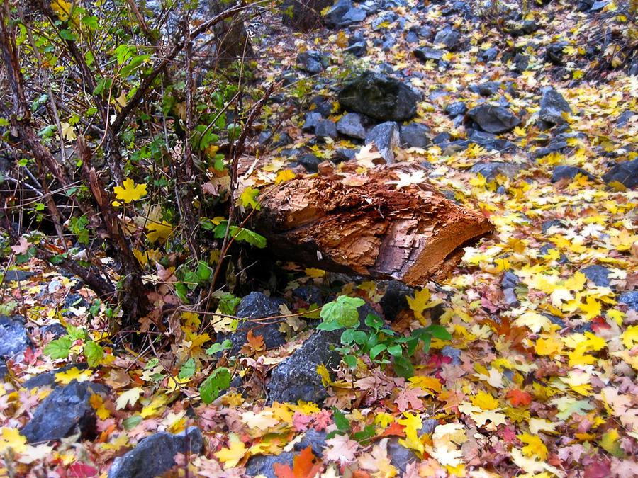 Autumn Log by Utukki-Girl