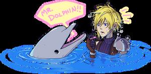 MR DOLPHIN