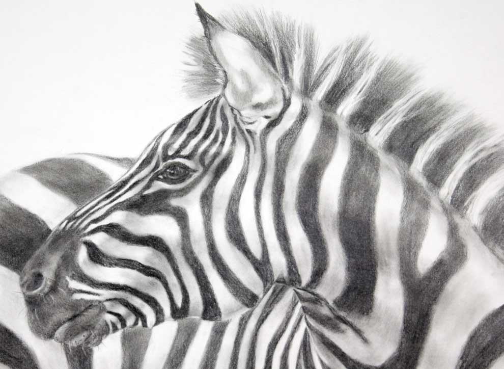 zebra drawing - photo #40