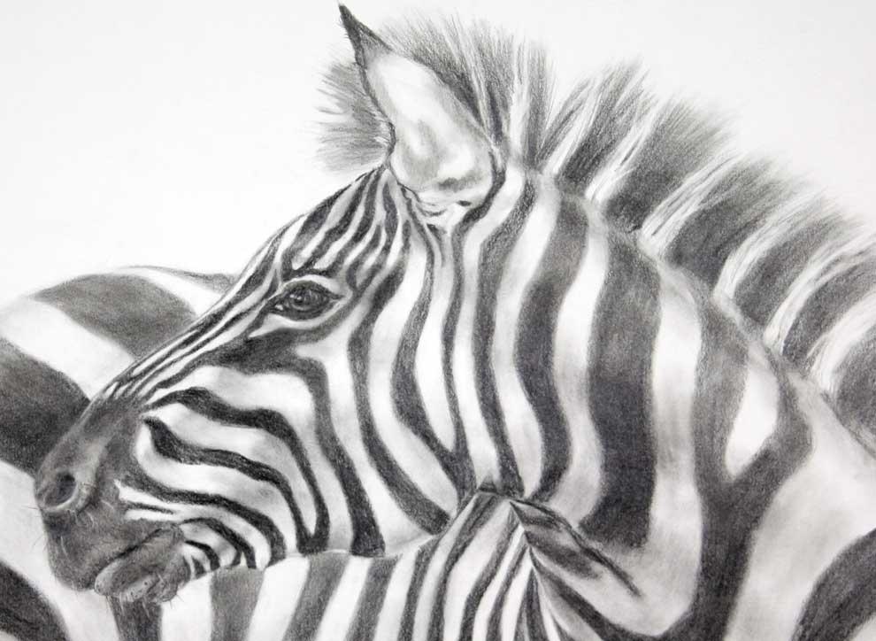 Zebra Pencil Drawing