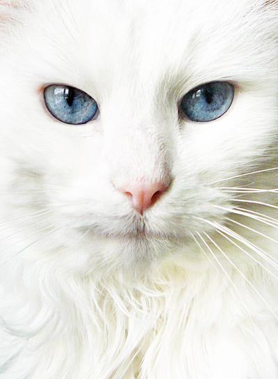 Mickey Blue Eyes by gintarais