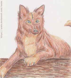 A King Shepherd dog called Willow