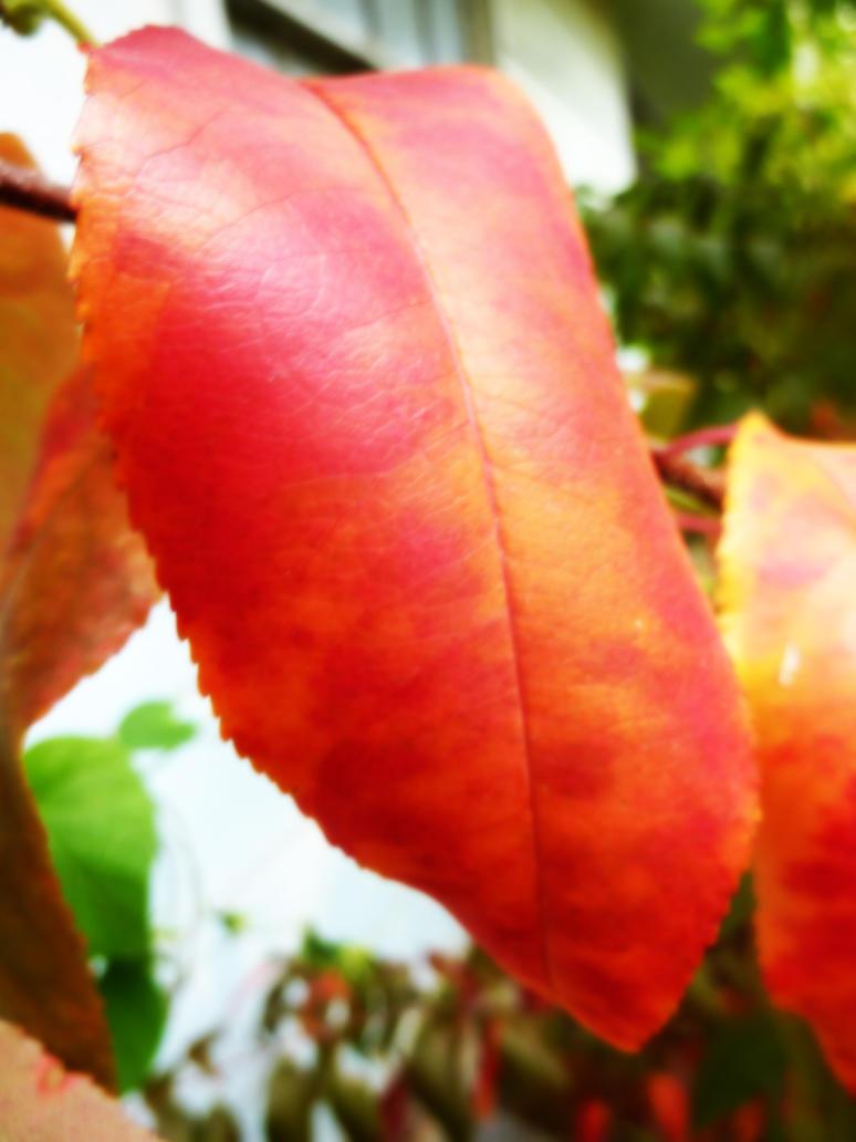 Autumn by AttiaStreeth17