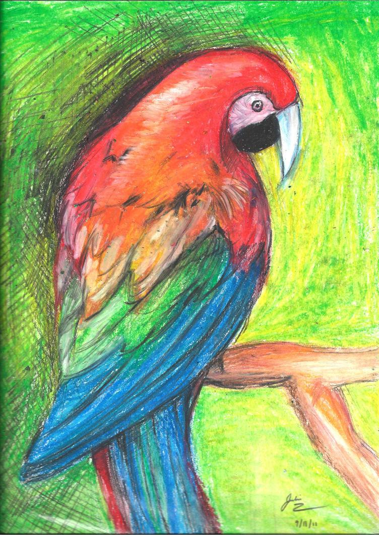 Parrot by julyfire