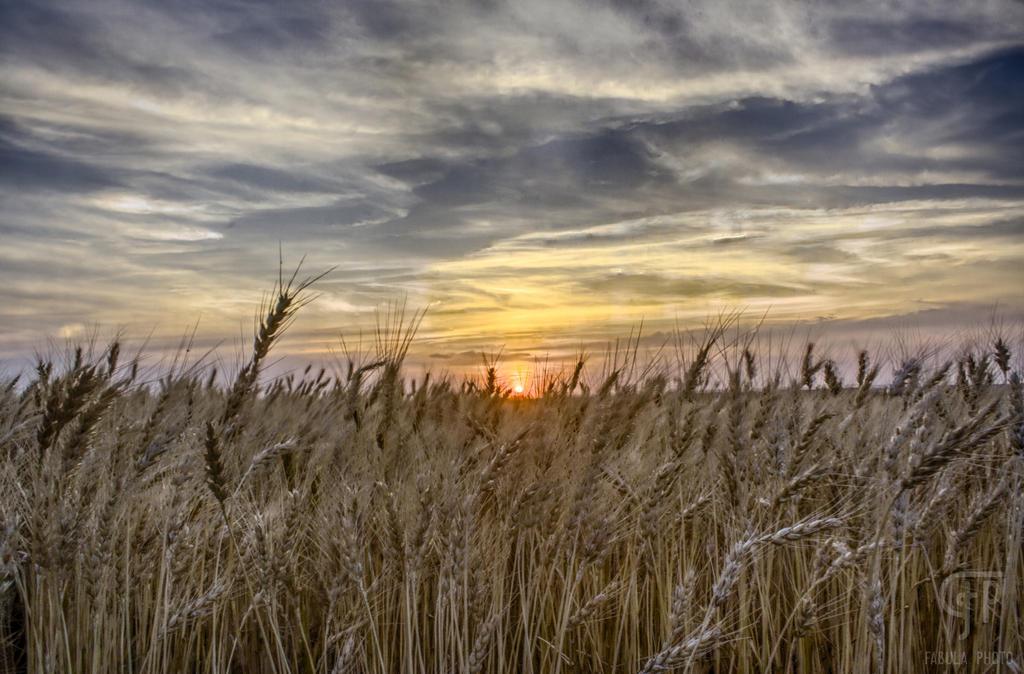 Wheat Field Sunset by FabulaPhoto on DeviantArt