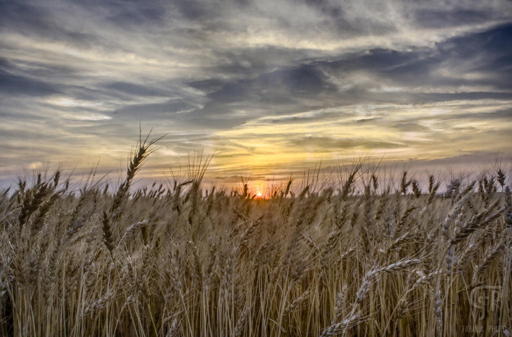 Wheat Field Sunset by FabulaPhoto