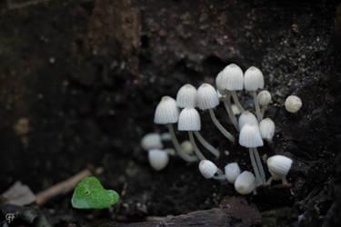 Untitled Fungi